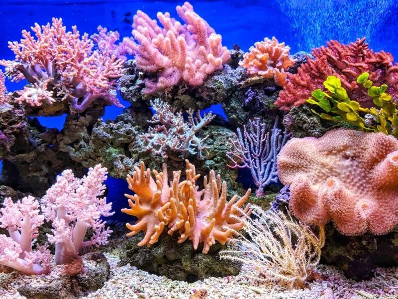 تغییرات سریع در صخره های مرجانی عامل دعوت جهانی برای تفکر دوباره