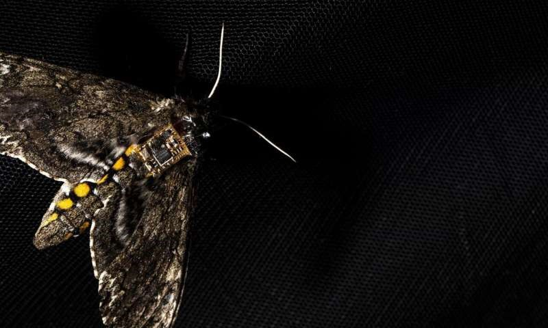 Airdropping sensors from moths
